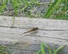 050717_dragonfly